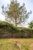 La sporcizia dall'albero della proprietà vicina inquina la propria proprietà fotografie stock