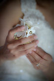 La sposa passa la bottiglia della tenuta del profumo della margherita Immagine Stock Libera da Diritti