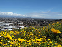 LA Spring. Spring flowers on top of the Baldwin Hills in the City of Los Angeles Royalty Free Stock Photos