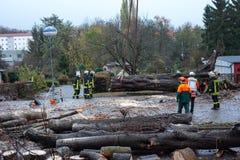 La squadra del vigile del fuoco taglia un albero abbattuto nella via Immagine Stock