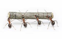 La squadra di formiche funziona con il libro macchina, lavoro di squadra Fotografia Stock Libera da Diritti