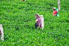 LA SRI LANKA, 8 DICEMBRE 2011 Fotografia Stock Libera da Diritti