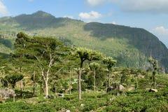 La Sri Lanka Fotografia Stock