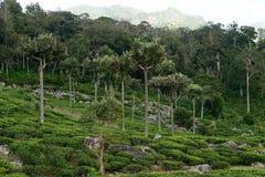 La Sri Lanka Fotografie Stock Libere da Diritti