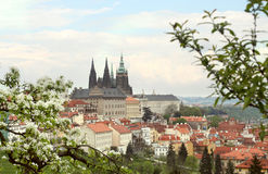 La st Vitus Cathedral a Praga Immagini Stock