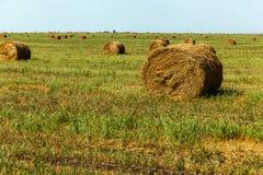 La stagione del raccolto nei campi, mucchio di fieno Immagini Stock