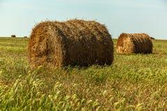 La stagione del raccolto nei campi, mucchio di fieno Fotografia Stock