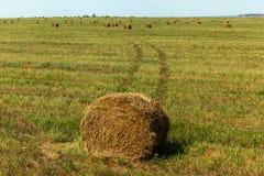 La stagione del raccolto nei campi, mucchio di fieno Immagine Stock