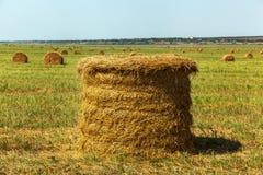 La stagione del raccolto nei campi, mucchio di fieno Fotografie Stock Libere da Diritti