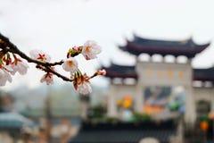 La stagione di Sakura Immagine Stock