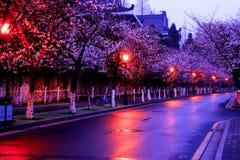 La stagione di Sakura Fotografia Stock Libera da Diritti