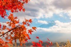 La stagione variopinta di autunno & la montagna Fuji nella nebbia e nel rosso di mattina va nel lago Kawaguchiko, Giappone immagini stock libere da diritti