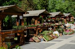 La stalle en bois de support du marché dans la rangée, se vendant fleurit Photographie stock