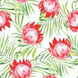 La stampa exzotic dell'acquerello, lascia la palma ed i fiori del protea Il modello con le piante tropicali isolate su fondo bian royalty illustrazione gratis