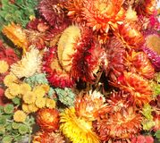 La stampa variopinta del fiore fotografia stock