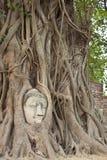 La statua capa di Buddha Immagini Stock