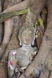 La statua di Buddha bloccata in albero si pianta al parco storico, Tailandia Immagini Stock