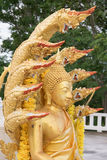 La statua di Buddha con nove ha diretto il serpente Immagine Stock