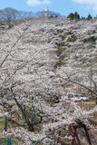 La statue de Kannon et le château de Funaoka ruinent le parc, Miyagi, Japon Photos stock