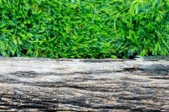La stecca di legno sull'erba verde Fotografia Stock Libera da Diritti