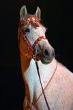 La stella dell'arena del circo Immagine Stock