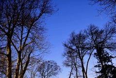 La stella trascina la notte 48 minuti intorno al Polaris, con gli alberi Immagini Stock
