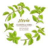La stevia vector l'insieme Immagini Stock Libere da Diritti