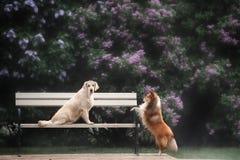 La storia di amore di due cani Fotografia Stock
