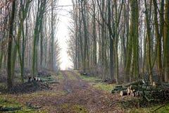 La strada è in primavera foresta, l'abbattimento della foresta, la raccolta del firewood_ immagini stock libere da diritti