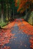 La strada al santuario di Taiyuinbyo ed a Nikko, Tochigi, Giappone Immagine Stock