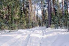 La strada alla foresta immagine stock libera da diritti