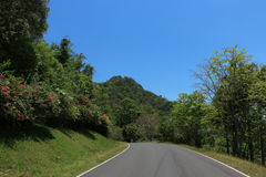 La strada alla natura Fotografia Stock