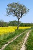 La strada alla natura - albero e campi Fotografia Stock Libera da Diritti