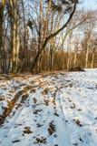 La strada allo schiarimento della foresta Giorno soleggiato di inverno Fotografie Stock