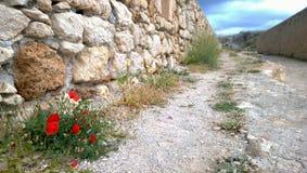 La strada allunga nella distanza ed in alcuni fiori del papavero nella priorità alta Fotografia Stock