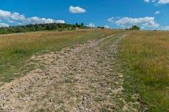 La strada asciutta del campo allunga su in un'alta collina fra le erbe dense Immagini Stock Libere da Diritti
