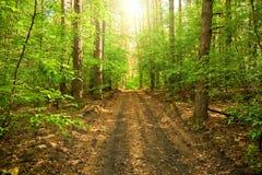 La strada attraverso la foresta Fotografia Stock Libera da Diritti