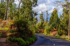 La strada attraverso la foresta leggiadramente del Madera, Portogallo Immagini Stock