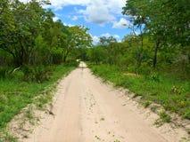 La strada attraverso la giungla. Immagini Stock