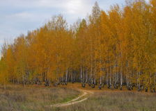 La strada in autunno Fotografia Stock Libera da Diritti