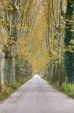 La strada campestre sbalorditiva ha allineato con gli alberi piani antichi in autunno Immagini Stock