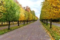 La strada con il fogliame di caduta e gli alberi gialli fotografie stock libere da diritti