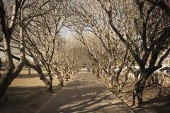 La strada degli alberi con fuori copre di foglie, effetto d'annata Immagini Stock