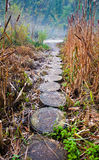 La strada dei tronchi Fotografia Stock