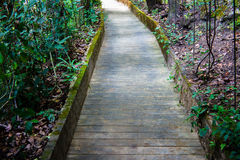 La strada del cemento è giardino con l'albero Immagine Stock