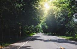 La strada della campagna e l'albero verde nel giorno con il sole si svasano fotografie stock libere da diritti