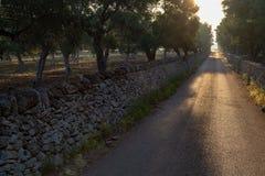La strada della campagna sull'alba, paesaggio con di olivo si avvicina al Nar Fotografie Stock