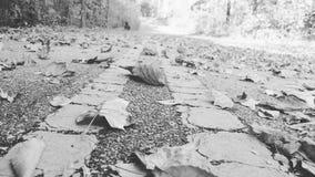 La strada delle foglie con gli alberi Immagini Stock Libere da Diritti