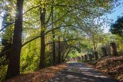 La strada delle foglie degli alberi condisce i colori Immagine Stock