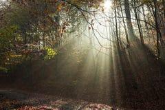 La strada di autunno attraverso la foresta con il sole del lato positivo rays Immagini Stock Libere da Diritti
